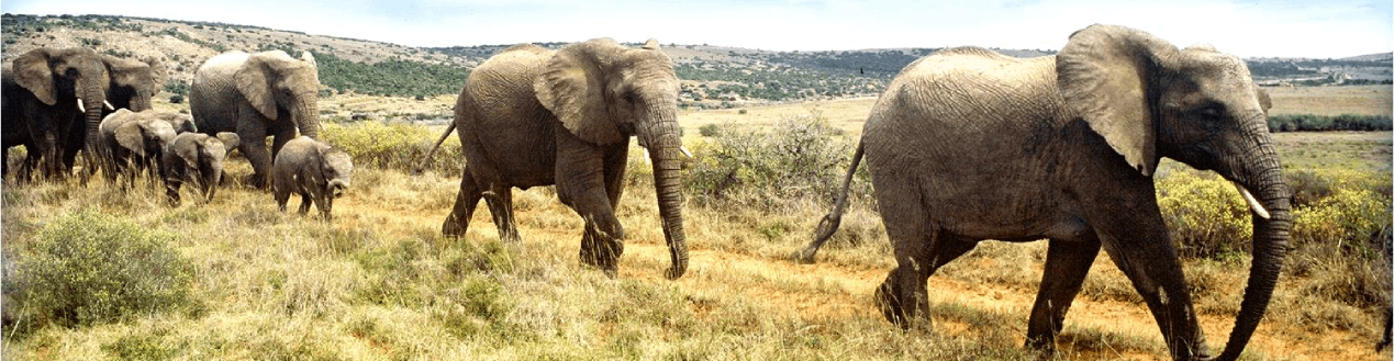 Luxury Coach Hire Services to ADDO Elephant Park